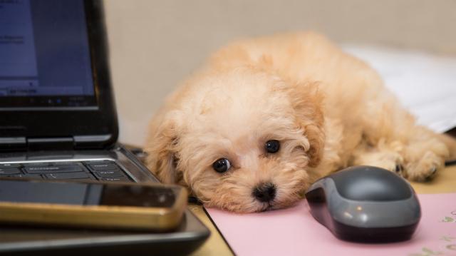 Új kutya az irodában