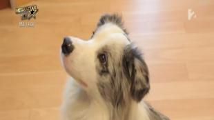 Fressnapf, a kutyabarát munkahely