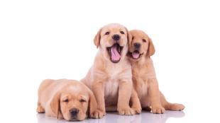 Most megnézheti a sztárok kutyáit!