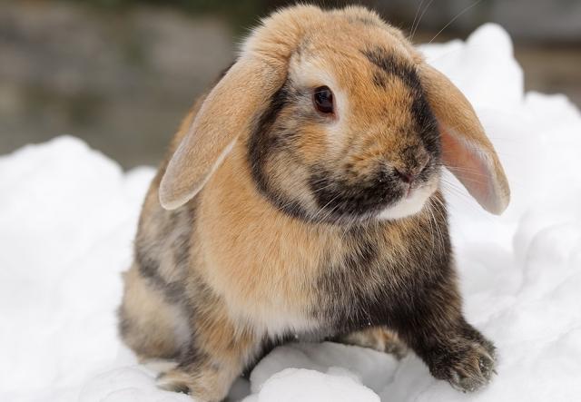 Kisemlősök téli szórakozása