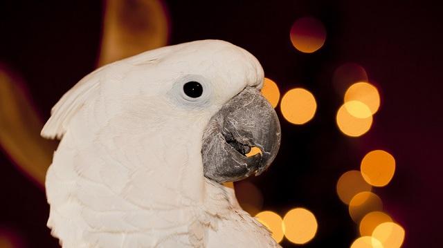 3 szórakoztató ajándékötlet madaraknak