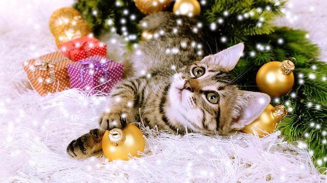 4 tipp egy tökéletes cicakarácsonyért
