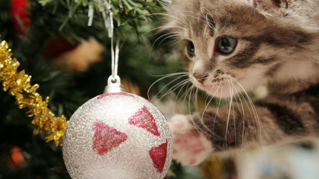 Cicabiztos karácsonyfa