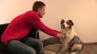 Kutyaaltatás