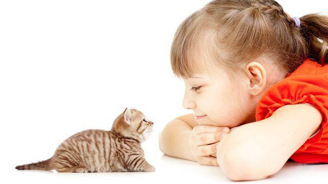 4+1 tipp fiatal macskatulajdonosoknak