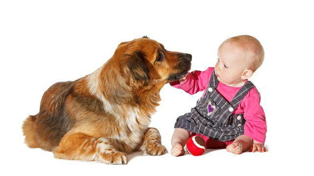 Bővül a család: féltékeny a kutyám?