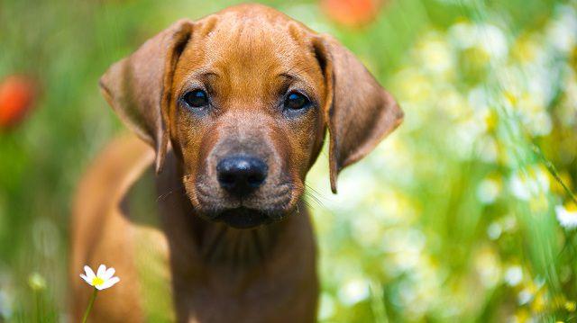 Kutyabarát úti célok városi kalandoroknak