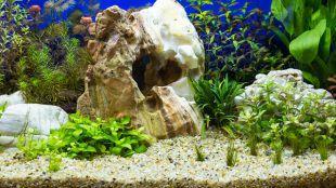 Nano, a miniakvárium