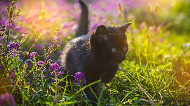 Itt a tavasz! Megőrült a macskám?!