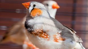 A madártartással kapcsolatos leggyakoribb tévhitek