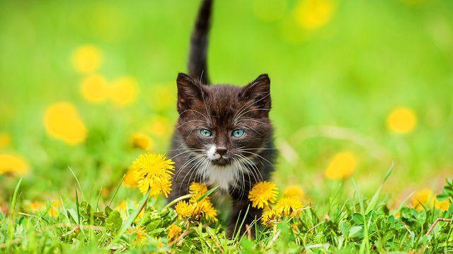 Figyeljen! Tavaszi veszélyek a kertben