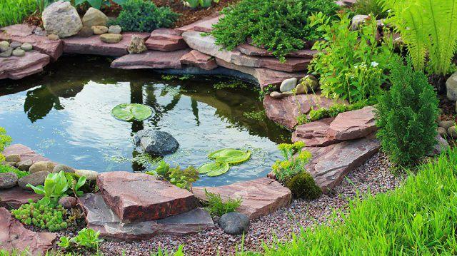 Növények a kerti tóba