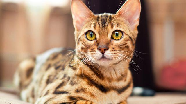 A hónap témája: macskabiológia
