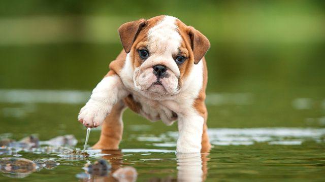 Vízparton kedvencünkkel