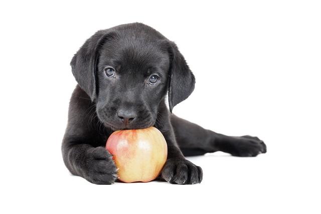 4 természetes jutalomfalat kutyáknak