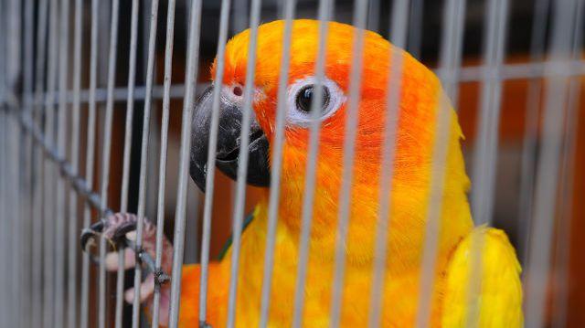 Az ideális madárház