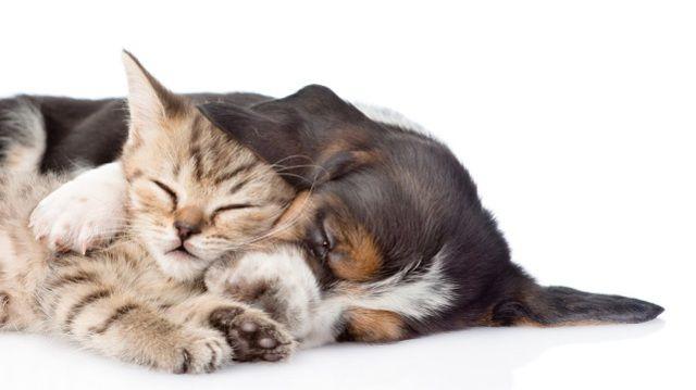 Készítse fel otthonát kiskutyák és kismacskák érkezésére