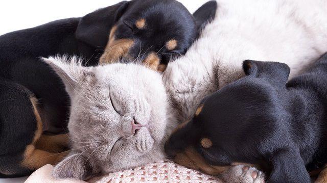 Apró kutya és nagy cica