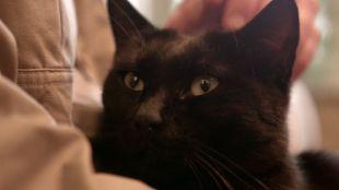 Macska örökbefogadása állatmenhelyről