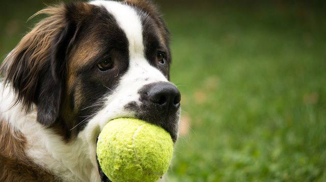 Figyelem! Túlélőkalauz nagytestű kutyával utazóknak