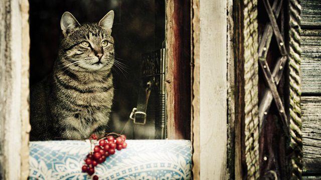 Mit érez napokig egyedül maradó cicánk?