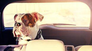 Hogyan autózzunk a kutyánkkal?