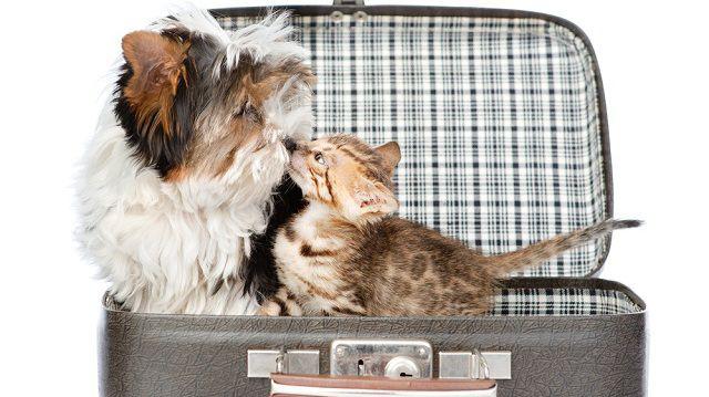 A nyaralás idejére másra bízott macska esete