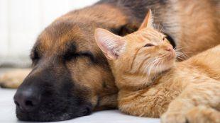 5 tipp a kutya-macska barátsághoz