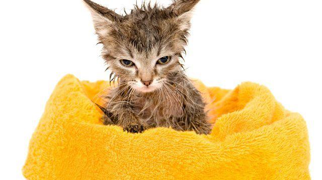 Híres ellentét: cica és a víz
