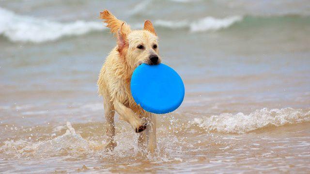 Az 5 legjobb vízi játék kutyáknak