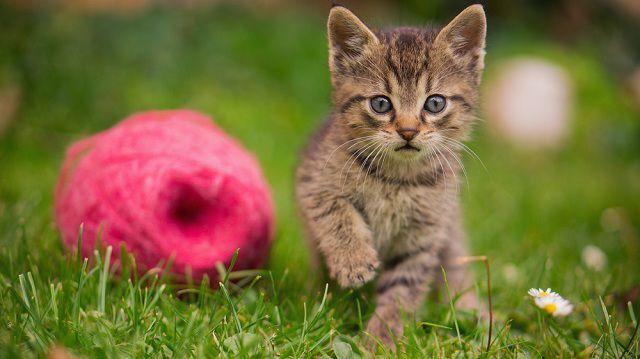 Nyári gombolyag, júliusi játékötletek cicáinknak