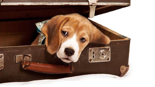 Biztonságos utazás háziállatokkal