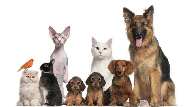 Milyen állatot válasszon?