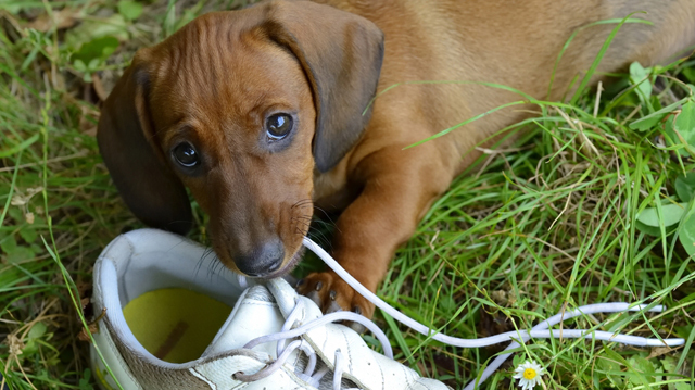 Kutyaiskolában engedelmes, otthon kezelhetetlen az eb