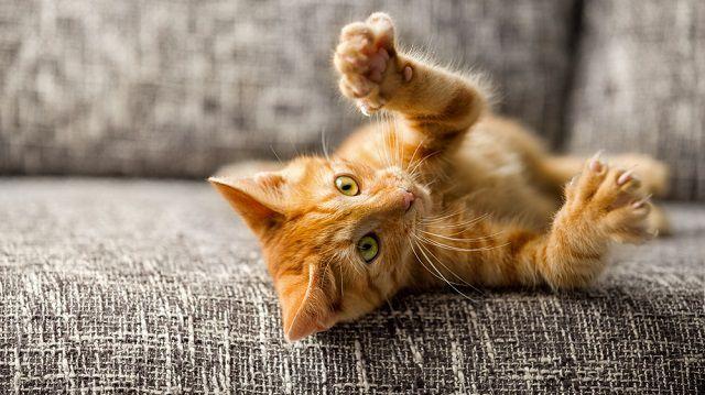 Tartalmas játékok cicáknak