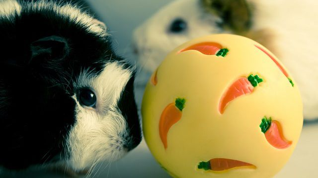 Taníthatóak-e a kisemlősök?