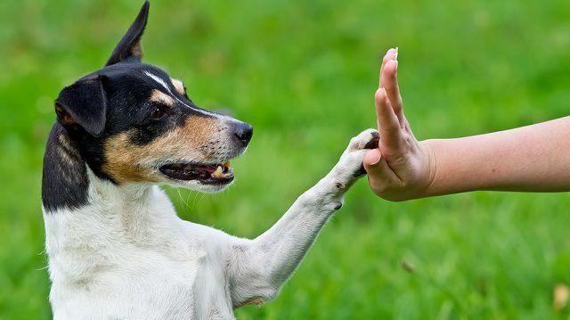 5 tipp kutyánk motiválásához