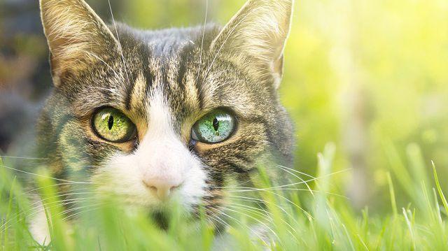 5 dolog, amit nem tudtál a cicák képességeiről