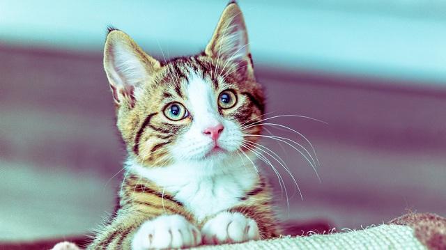 A hónap legjobb kiegészítői kutyák és cicák számára
