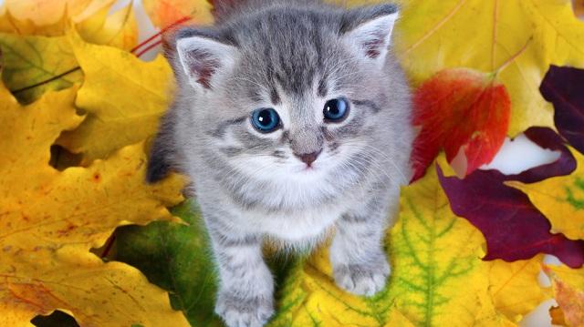 Őszi kiscicák egészséges felnevelése