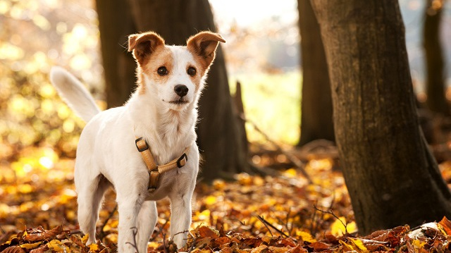 Figyelem! 5+1 őszi óvintézkedés kedvenceink védelmében