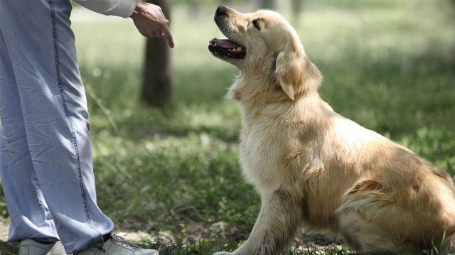 Miről ismerjük fel a jó kutyakiképzőt?