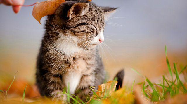 5+1 hasznos tipp őszi kiscicák felneveléséhez