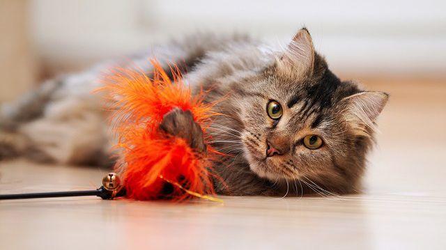 Vidám cicás játékok a borús napokra