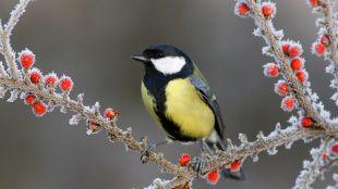 A vadon élő madarak etetése a sötétebb hónapokban