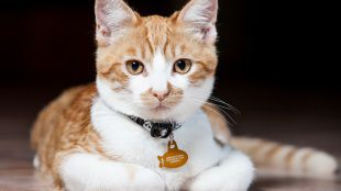 Fő a láthatóság – avagy hogyan óvjuk éjszaka kalandozó cicánkat?