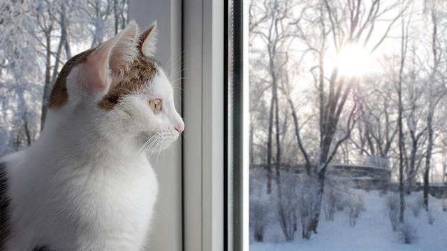 Cicagazdik, figyelem! Az 5 legfontosabb téli előkészület