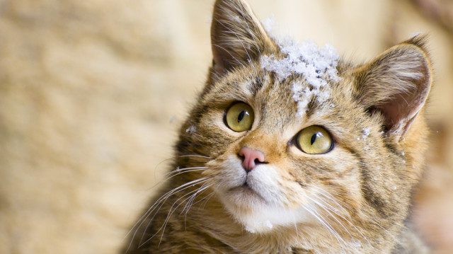 Fagyban is biztonságban – így óvja a cicáját!