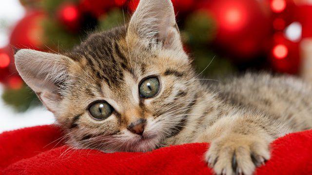 Ünnepi készülődés, erre figyeljen, ha cicája van