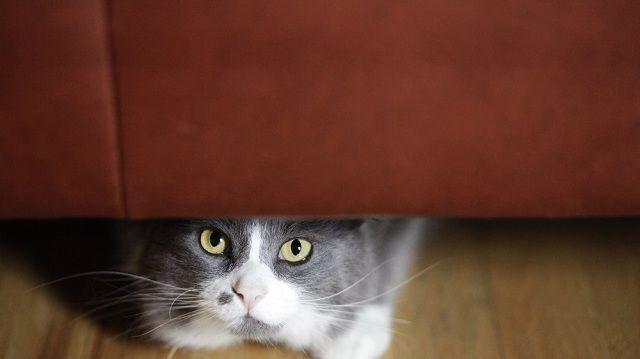 Decemberi jövés-menés: készítse fel cicáját!
